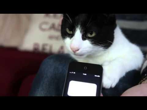 Anteprima Video Merlin, il gatto con le fusa più rumorose