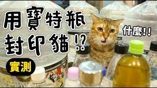 【黃阿瑪的後宮生活】用寶特瓶封印貓!實測