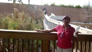 feeding birds with my hand in Gatorland.
