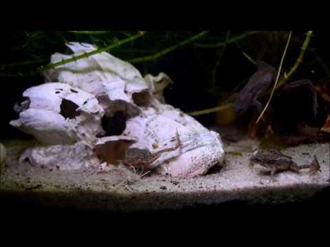 Die weißen Würmer im Anus des Fotos