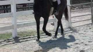 LAME or SOUND horse? filmed by Twombly Publishing