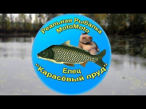 Как поймать Ельца на Карасёвом пруду [АРХИВ] | Реальная Рыбалка