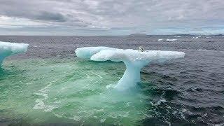 Рыбаки думали что это тюлень на дрейфующей льдине, но когда приблизились то сильно удивились