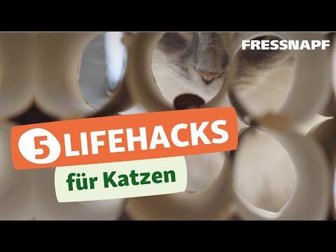 5 Lifehacks für Katzen - einfach und praktisch