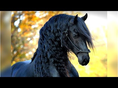 Eight of the Most Beautiful Horse Breeds