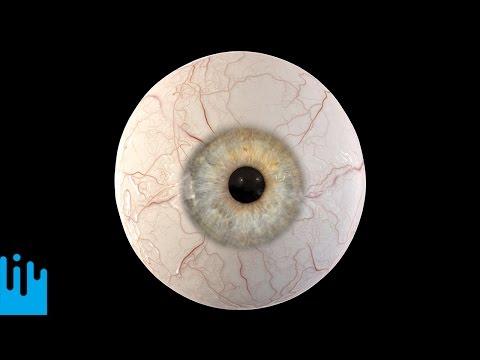 Novinky z vědy a techniky #110: Model oka
