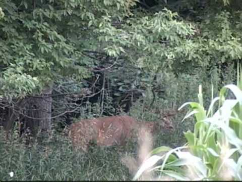 2009 Buffalo County Whitetails.. A look ahead!