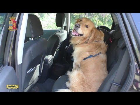 Polizia Stradale in azione: come trasportare il cane in auto