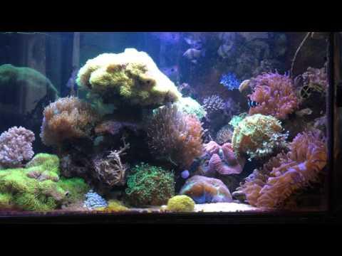 meerwasser aquarium video von qx1uunlt9aq. Black Bedroom Furniture Sets. Home Design Ideas