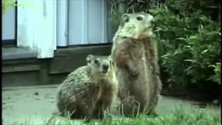 Happy, Happy, Happy Groundhog's Day
