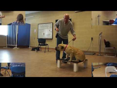 Joel Silverman's Dog Trainer Certification Course - Part I - YouTube