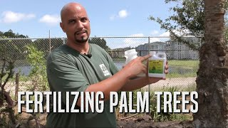 Fertilizing Palm Trees
