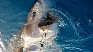 Рыбалка в турции средиземное море