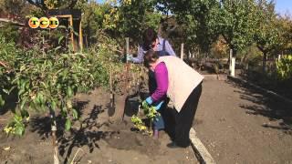 6 советов по размещению смородины в саду