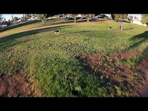 Geprc Cinequeen Tarsier - FPV May Morning Cruzin Park/Trees/Dogs