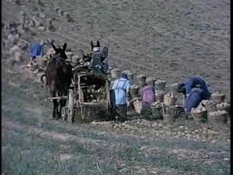 The Amish: A People of Preservation DVD movie- trailer
