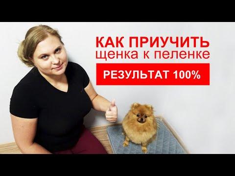 Топ 11 советов | Как приучить щенка к пеленке | 100% результат | Подробная инструкция