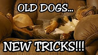 Old Dogs... NEW TRICKS? Bible Truth with Training!