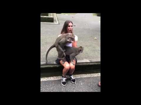 Monkeys mating on cute girl