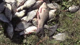 Рыбалка на реке нура в казахстане