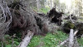 Live-Video: Sturmgewalt - über umgestürzte Bäume