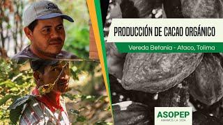 Producción de Cacao Orgánico: Vereda Betania (Ataco)