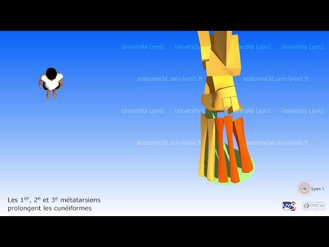 La varice variqueuse sur les pieds les symptômes et le traitement de vidéo