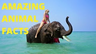 Interesting but useless facts about animals