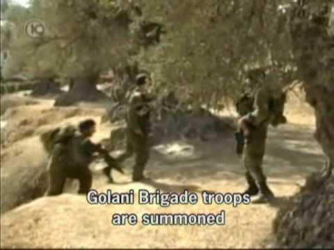 settlers' attack on olive harvest- hebron
