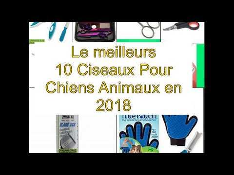 Le meilleurs 10 Ciseaux Pour Chiens Animaux en 2018