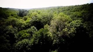 Écho Isolés, les maisons sylvestres