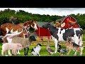 Hewan ternak dan suara pendidikan Bayi balita anak anak prasekolah Tokek