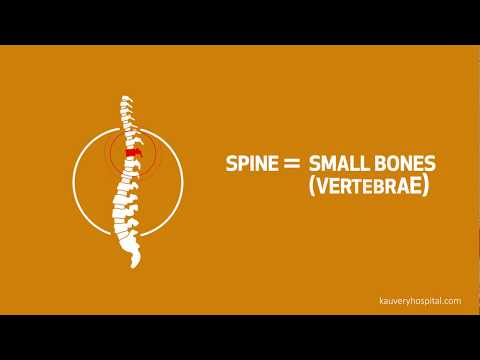 Facts about Spine and Spine Injuries