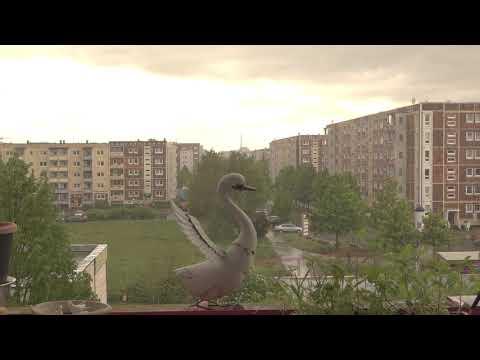 Regengeräusche: Das beruhigende Geräusch von Regen zum Einschlafen # 01