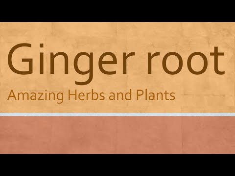 Video Ginger root Health Benefits - Ginger root nutrition facts - Amazing Herbs Ginger