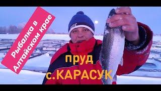 Рыбалка в алтайском крае алтайский край