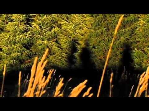 Halal Wild Venison Hunting - Gordon Ramsay