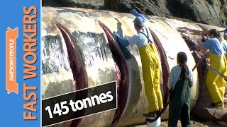Fast Workers #20 - Amazing Cutting skills (Cutting Blue Whale 145 tonnes)