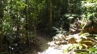2015-10-13 Walk in Djiru National Park