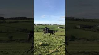 Shiver Stream (Gentlewave) working for the last time on the Long Mountain before going into training with Dan Skelton