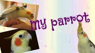 TAG/ Мой пушистый друг/ ♡ мой попугай ♡