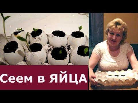 """""""КРУТЫЕ"""" ЯЙЦА - СЕЕМ В ЯЙЦА!!! Посев семян огурцов в яичную скорлупу. Эксперимент!"""