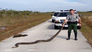 8 of Florida's Most Invasive Species