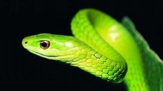 Суперский фильм! Самые ядовитые Змеи Планеты Документальные фильмы, фильмы про змей