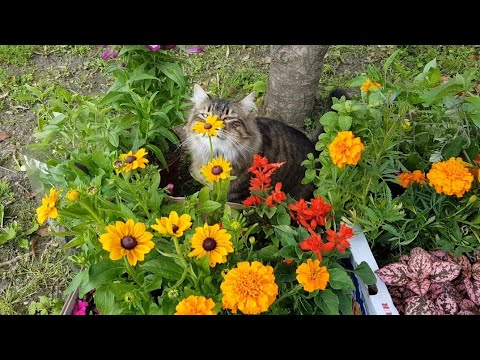 Hidup diluar Negri|kepasar beli bibit sayur dan bunga|Leroy Vetrarini