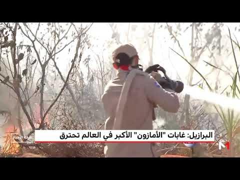 العرب اليوم - شاهد: غابات