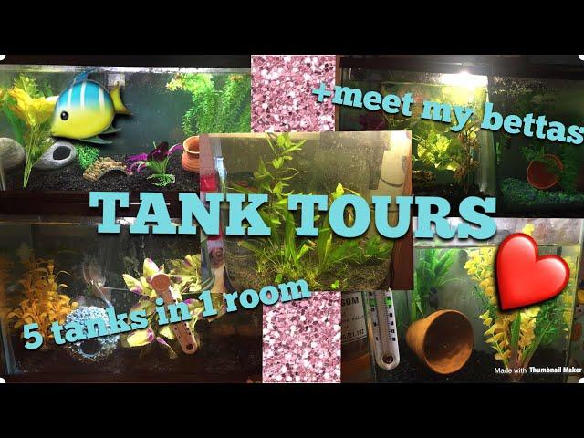 FISH TANK TOURS!! PLUS MEET MY BETTA FISH!! 5 TANKS IN 1 ROOM