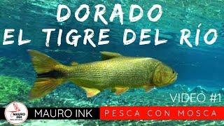 PESCA de DORADOS  (5 CLAVES para CAPTURARLO)  🎣 PESCA CON MOSCA ARGENTINA 🐟 FLY FISHING