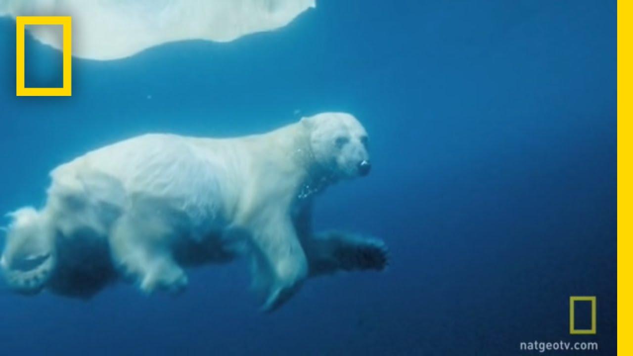 Underwater Polar Bear | National Geographic thumbnail