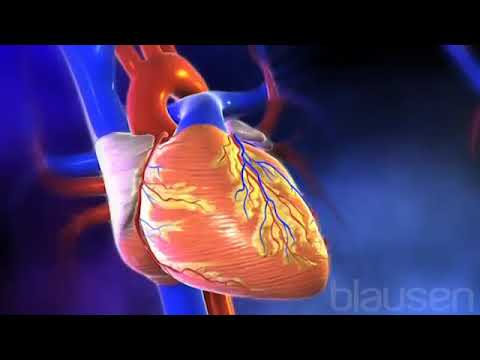 Heart Attack - The Heart is The Primary Organ of the Cardiovascular System